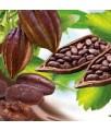 Cacao-Antioxydant naturel